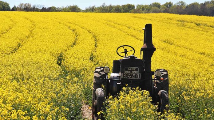 The healthiest vegetable oil: Canola or olive oil