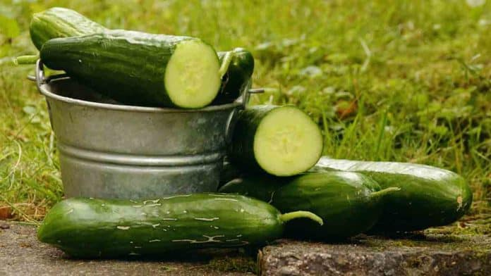 Cucumber is good for weight loss, hydration, and helping recore faster.