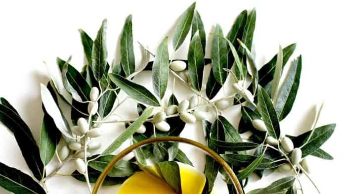 Can olive leaf extract boost the immune system? What are the health benefits?