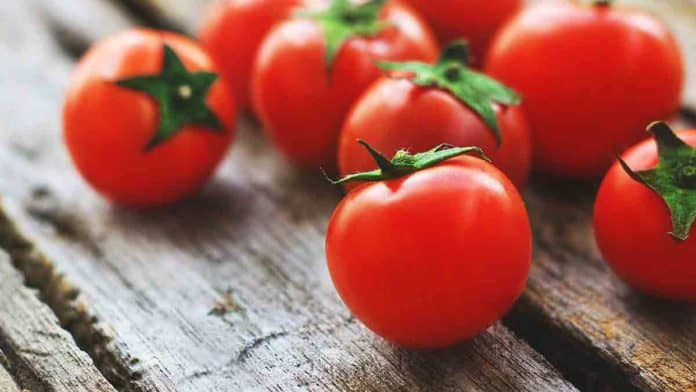 How much lycopene in tomato?