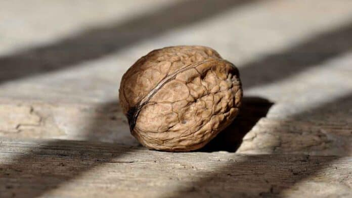 Are walnuts good for brain health?