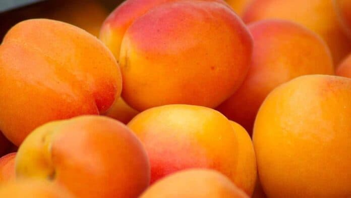 apricots for weight loss